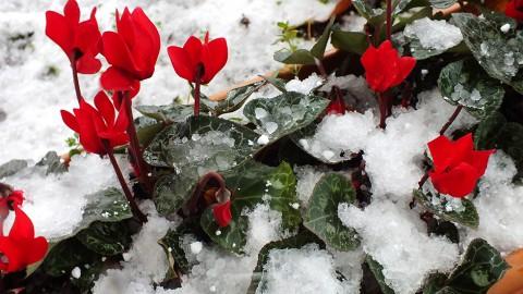 Februar 2014 – Von Jahreszeiten, Wind und Wetter