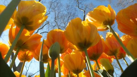 April 2014 – Frühlingsgedanken im Schleppnetz – helle und dunkle