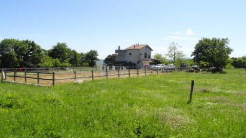 Herzlich Willkommen Pferdefreunde – Kiliçli– ein Stück Heimat